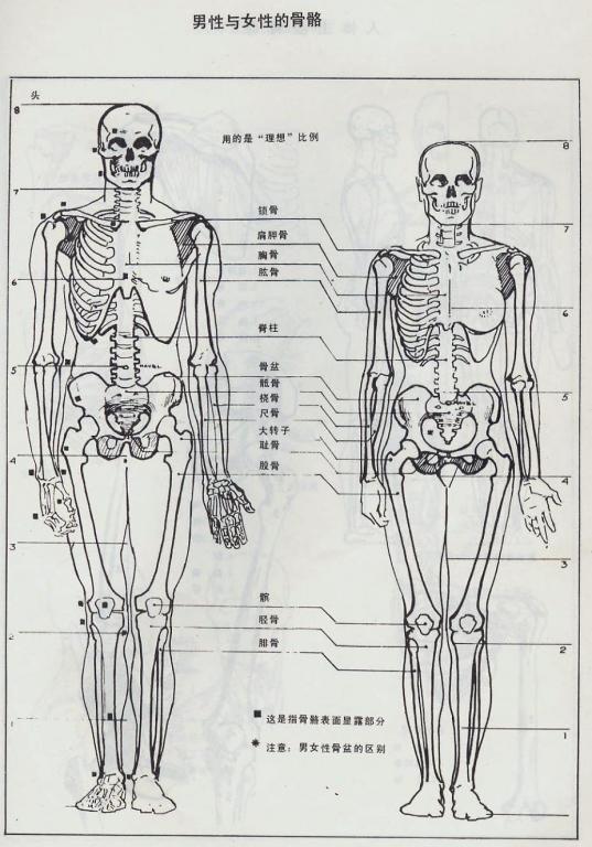 重复骨骼的设计图