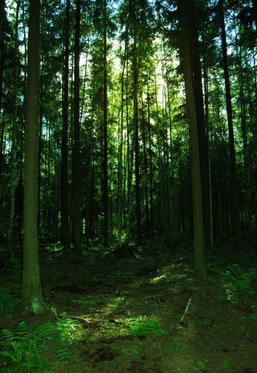 壁纸 风景 森林 桌面 529_768 竖版 竖屏 手机
