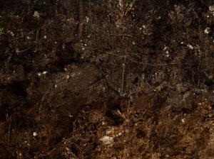 土壤截面贴图